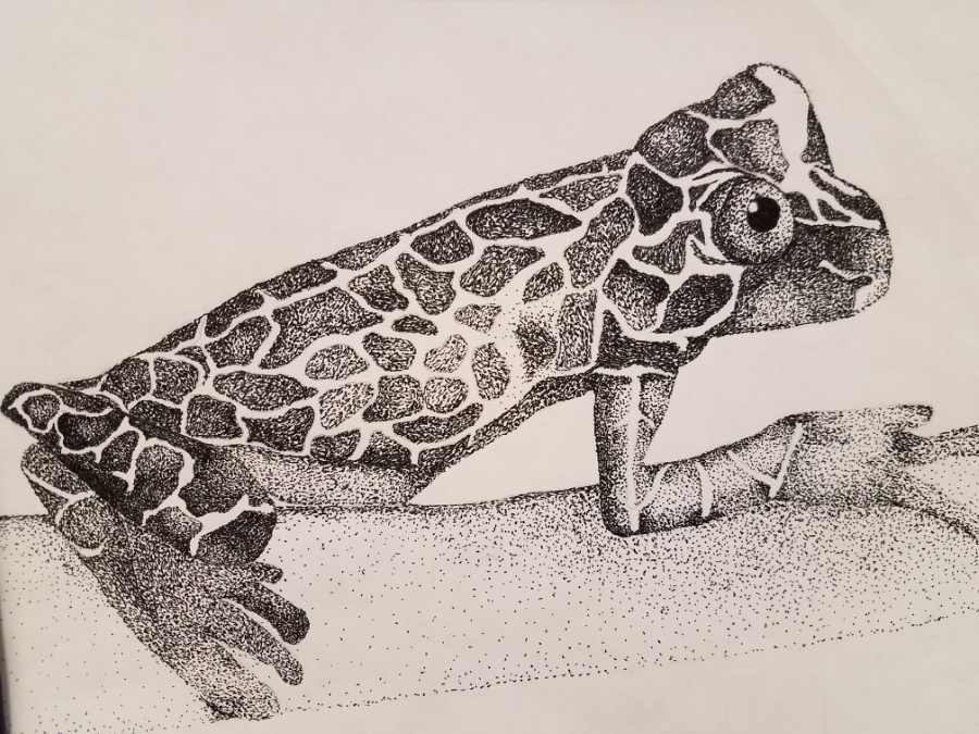 image: pen and ink drawing of a frog